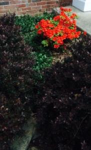 Beauty...more or less under a bushel basket..
