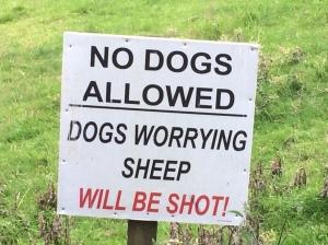 So, just who is my Shepherd, anyway?